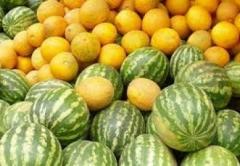 watermelon_melon_11_07_16