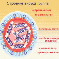 строение гриппа